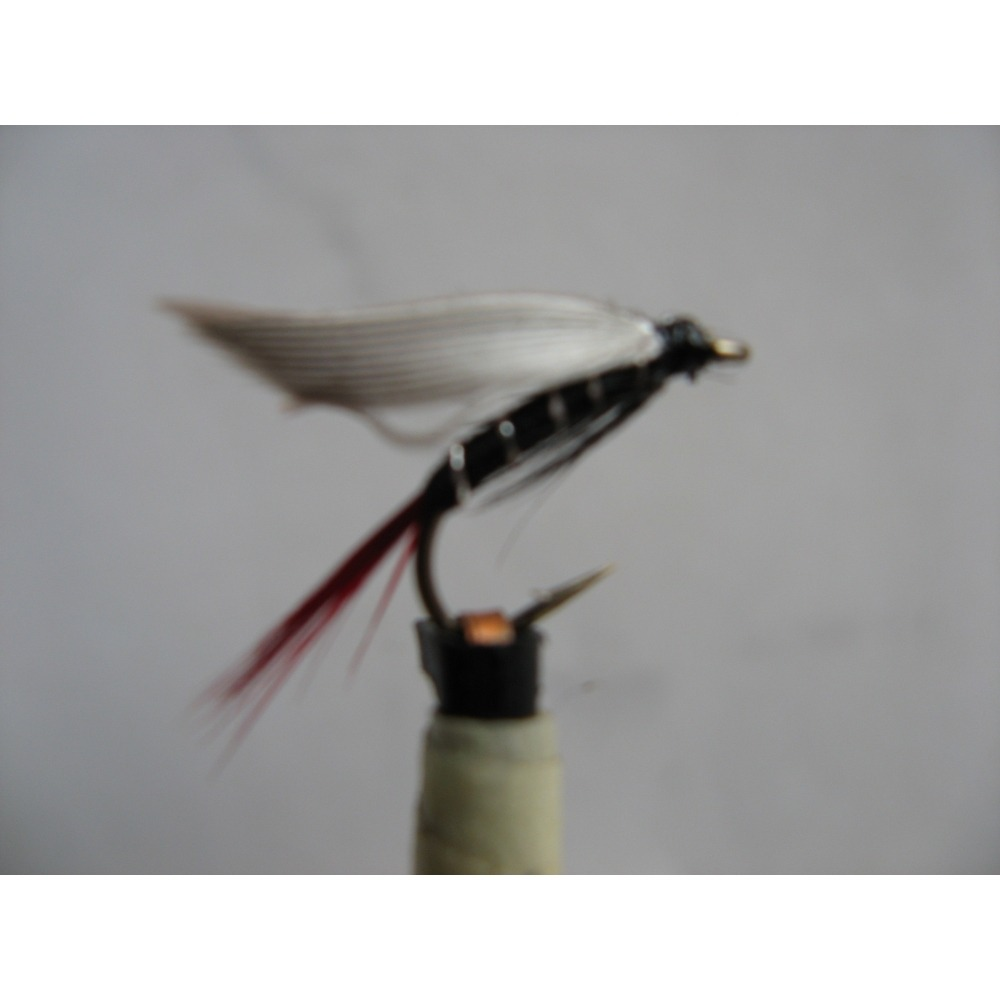 Wet Blae & Black Red Tail Size 12
