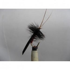 Cats Whisker Black Size 10 L/S