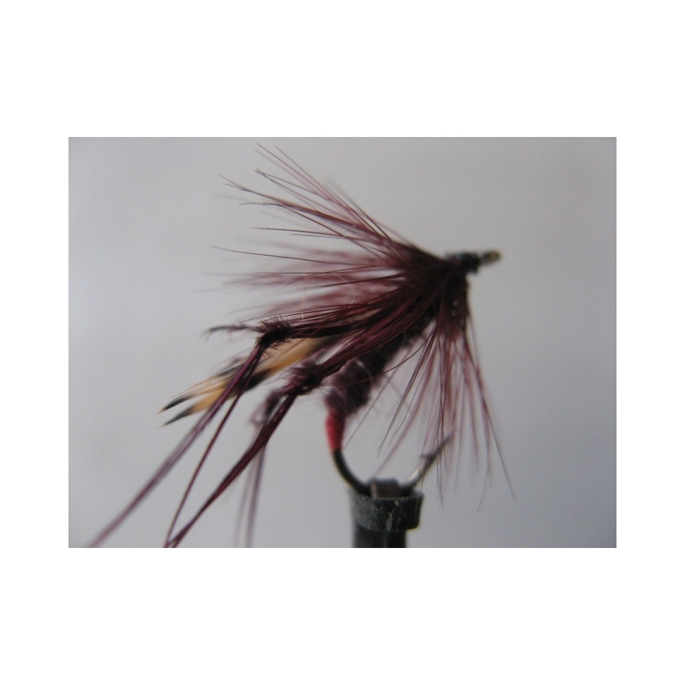 Daddy Drowned Claret Size 10