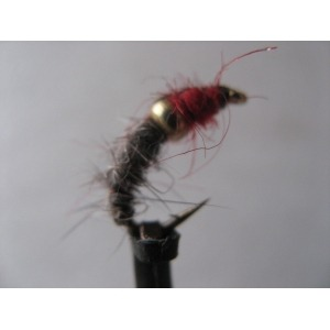 Sedge Brown Horned
