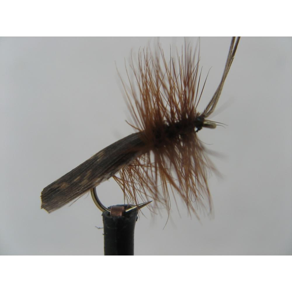 Sedge Dark Brown Horned