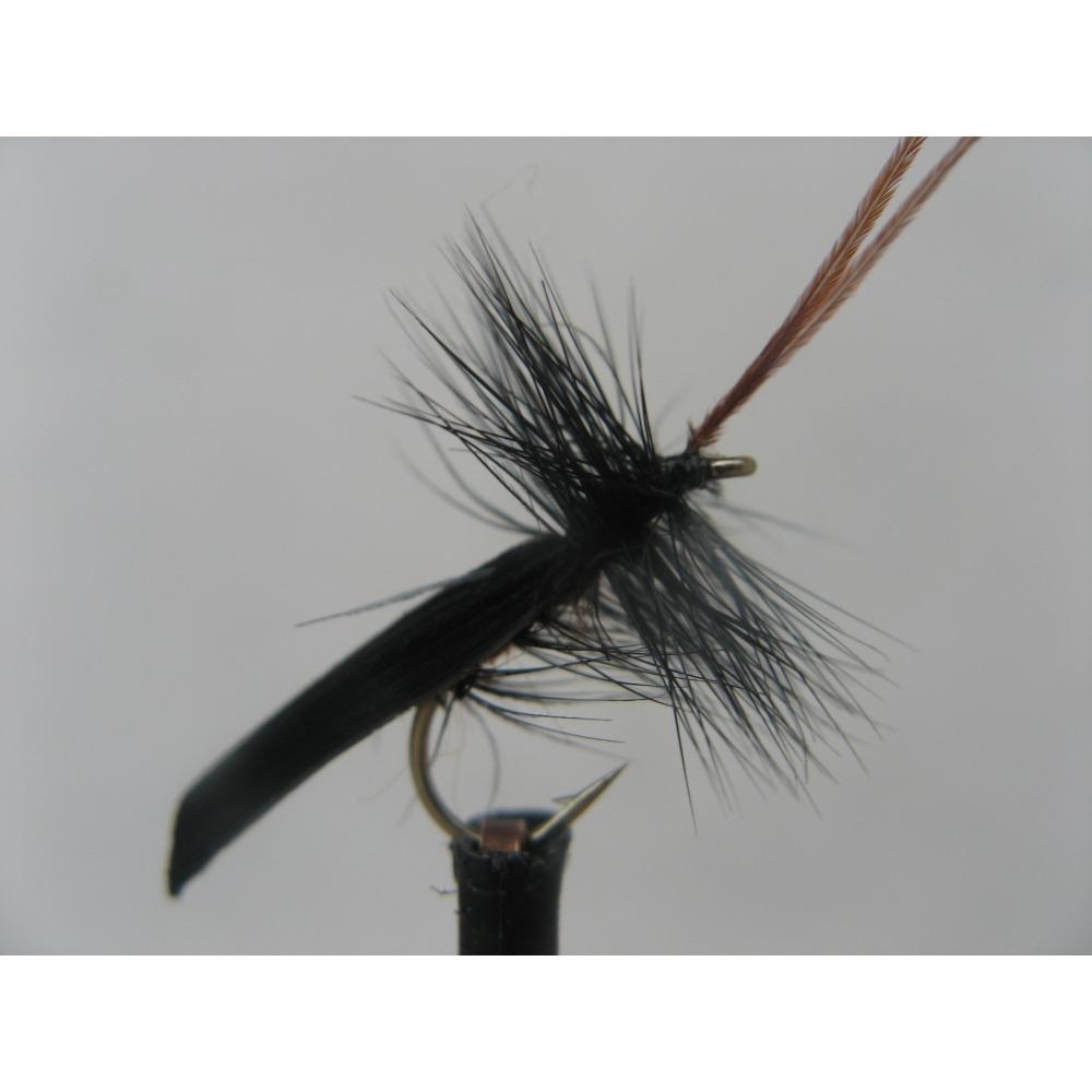 Sedge Black Horned