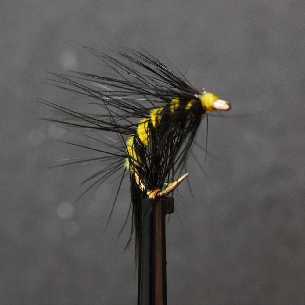 Yellow and Black Scud Shrimp