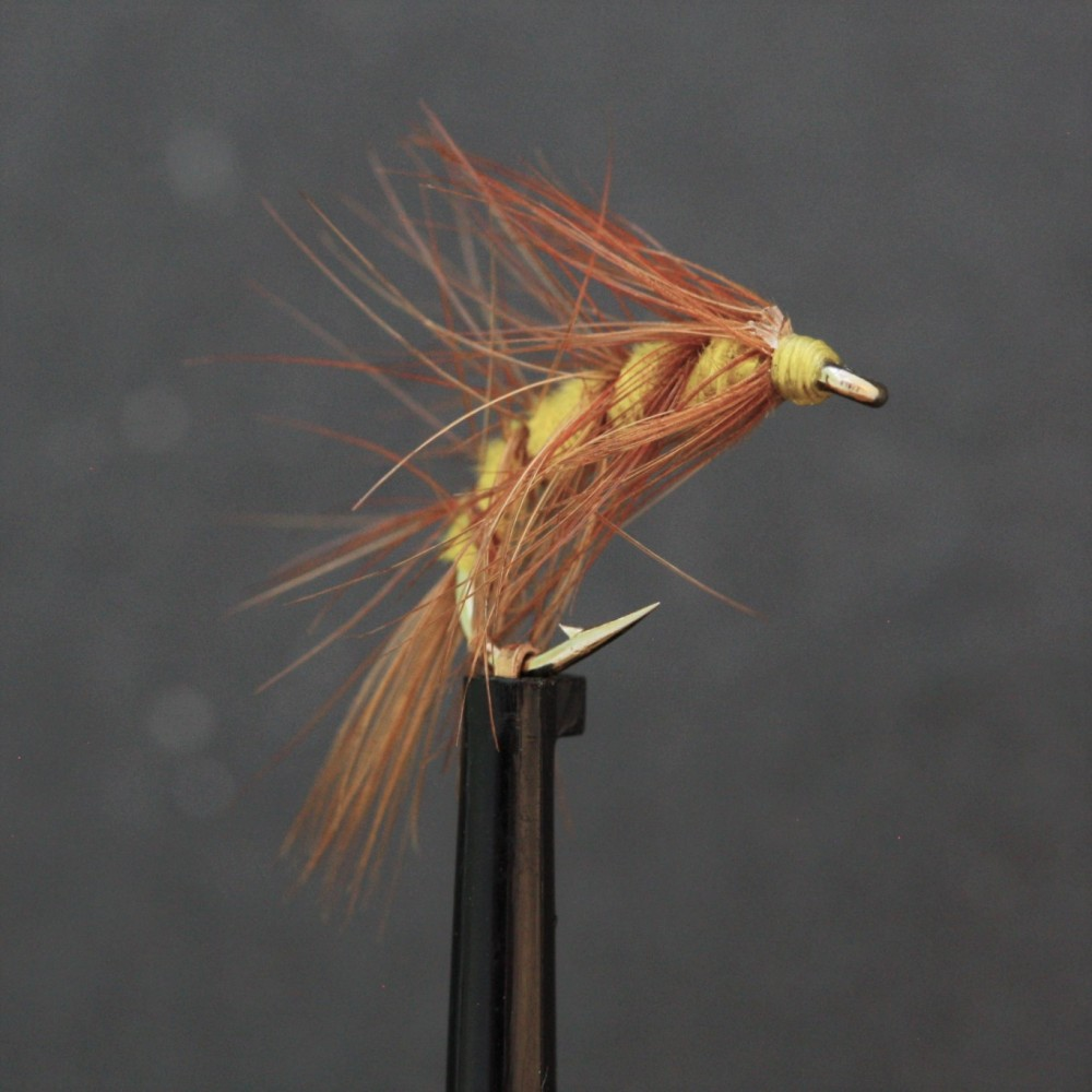 Yellow and Brown Scud Shrimp