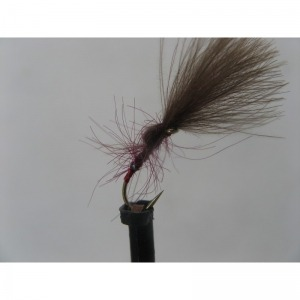 Sedge Black Horned