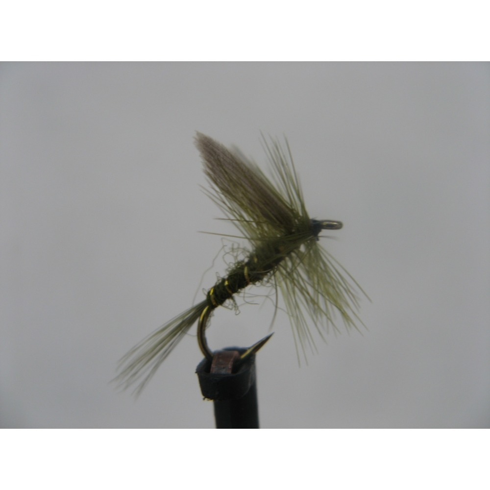 Dry Rough Olive Size 14