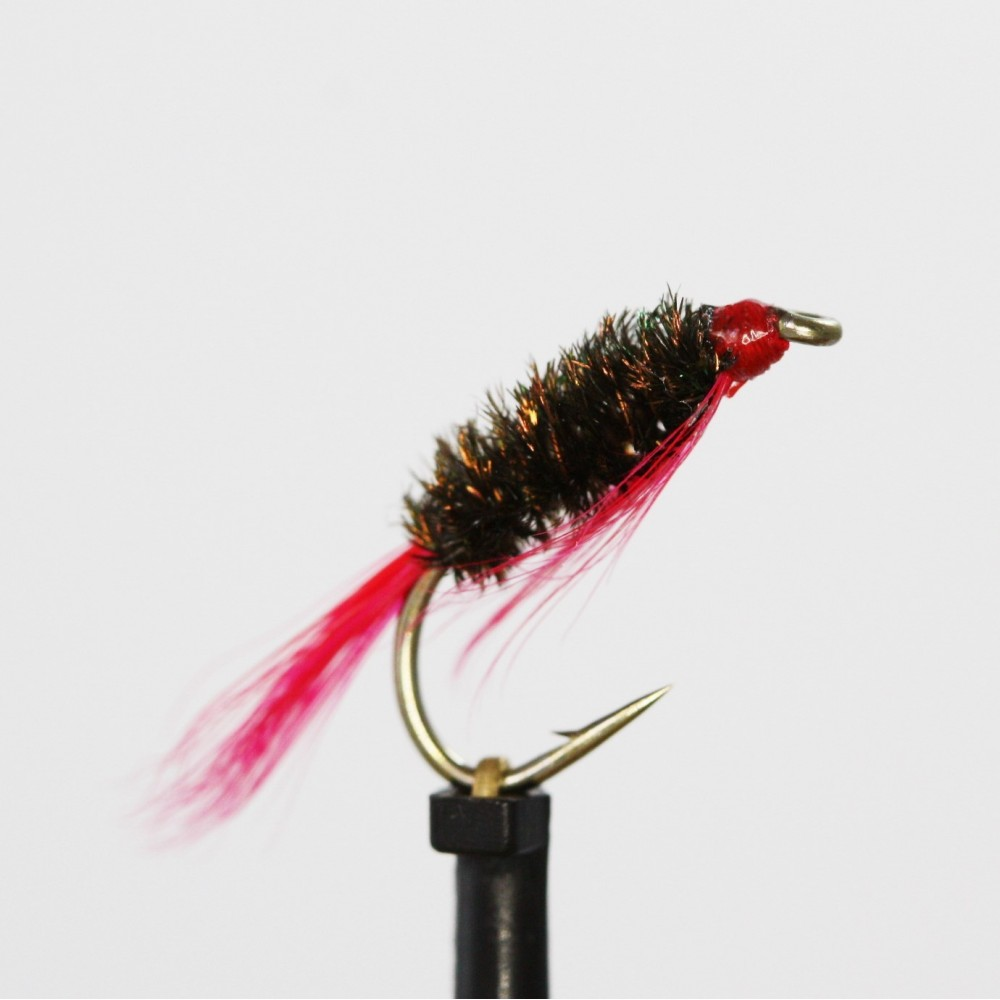 Red Tail Diawl Bach