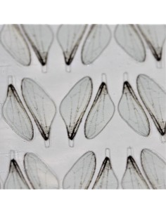 Realistic Fly Wings