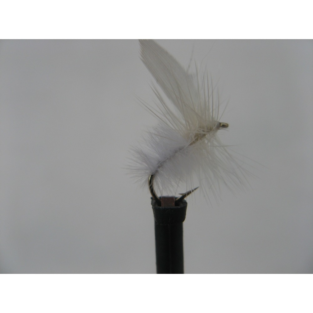 Dry White Moth Size 14