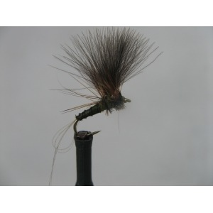 Spider Hares Ear Size 12